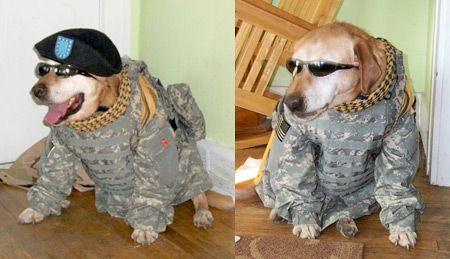 Max (7 yrs old from Pratt, KS) loves the military. Every time he sees his human's uniform he barks with excitement!