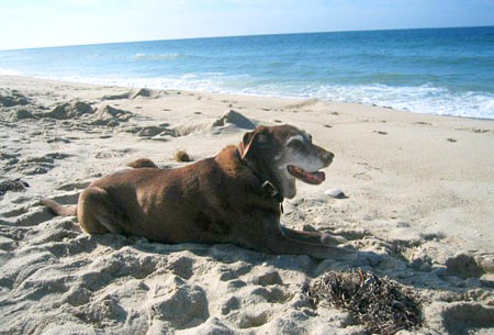Sienna, 15 yrs old from Rhode Island, loves the beach. It